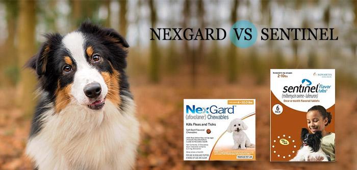 Nexgard-vs-Sentinel