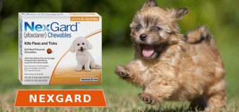What You Don't Know About Nexgard Flea & Tick Control for Dogs
