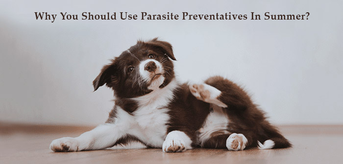 Parasite-Preventatives-In-Summer