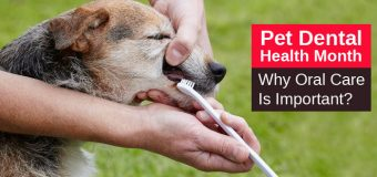 Pet Dental Health Month: Why Oral Care Is Important?