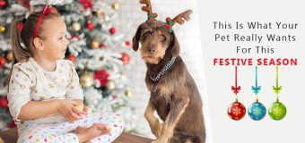 Tips To Keep Your Pets Safe & Healthy This Holiday Festival Season
