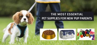 The Most Essential Pet Supplies For New Pup Parents