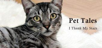 Pet Tales: I Thank My Stars