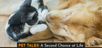 Pet Tales: A Second Chance at Life