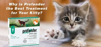 Why Is Profender The Best Treatment For Your Kitty?