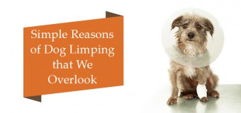 Simple Reasons Of Dog Limping That We Overlook