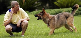 9 Essential Recall Training Steps for Dogs