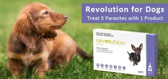 Revolution for Dogs:Treat 5 Parasites with 1 Product