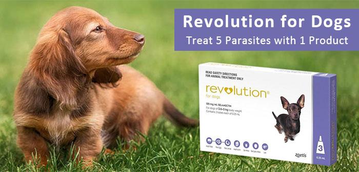 Revolution-for-dogs