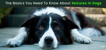 The Basics You Need To Know About Seizures in Dogs