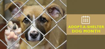 Significance of National Adopt-A-Shelter Dog Month