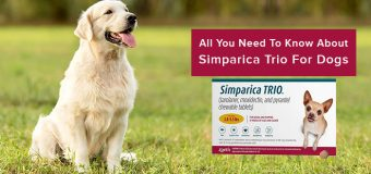 All You Need To Know About Simparica Trio For Dogs