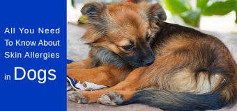All You Need To Know About Skin Allergies in Dogs