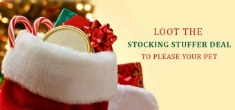 Loot The Stocking Stuffer Deal To Please Your Pet