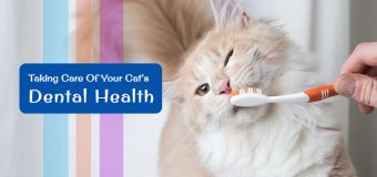 Happy Healthy Cat Month: Take Care of Your Cat's Dental Health