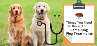 Things You Need To Know About Combining Flea Treatments