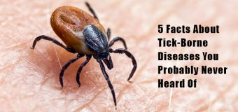 5 Facts About Tick-Borne Diseases You Probably Never Heard Of