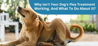 Why Isn't Your Dog's Flea Treatment Working, And What To Do About It?