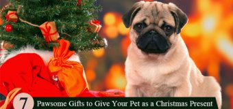 7 Pawsome Gifts to Give Your Pet as a Christmas Present