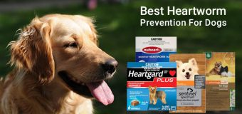 Comparison Chart: Best Heartworm Prevention For Dogs