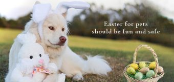 Do's And Don'ts While Celebrating Easter with Your Pet