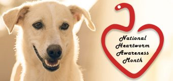 National Heartworm Awareness Month – Why Every Pet Needs Heartworm Preventive Treatment