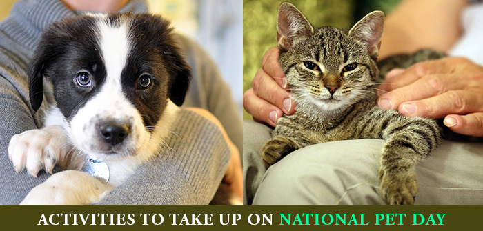 Pet Activities On National Pet Day