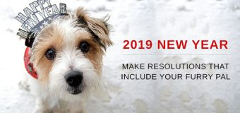 2019 NEW YEAR – Make Resolutions That Include Your Furry Pal