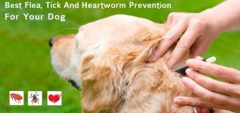 Best Flea, Tick And Heartworm Prevention For Your Dog
