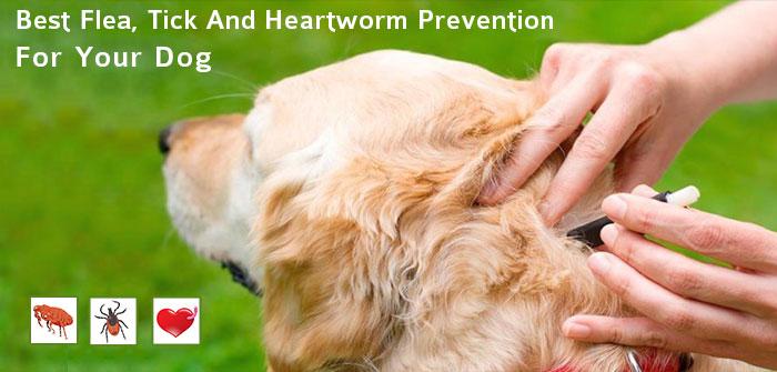 Ease of Flea, Tick and Heartworm Preventatives