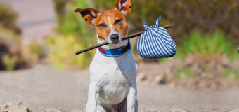 5 Easy STEPS To Follow If You Find A Lost Pet