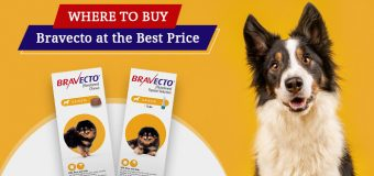 Where to Buy Bravecto for Dog at the Best Price?