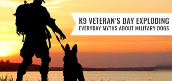 K9 Veterans Day – Exploding Everyday Myths about Military Dogs