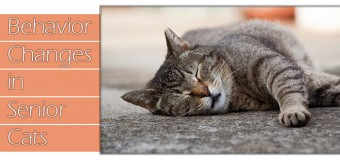 Behavior Changes in Senior Cats