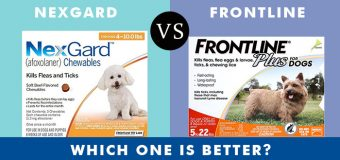 Nexgard vs Frontline Plus: Which One Is Better?