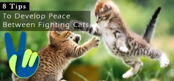 5 Tips to Develop Peace Between Fighting Cats