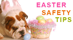 Top Five Easter Safety Tips for Your Pet