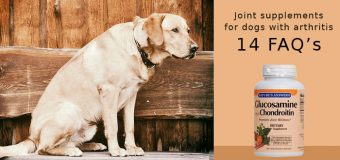 Joint supplements for dogs with arthritis: 14 FAQs