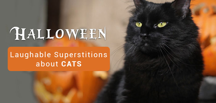 Halloween-about-black-cat