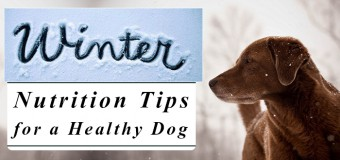 Winter Nutrition Tips for a Healthy Dog