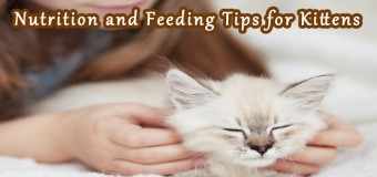 Nutrition and Feeding Tips for Kittens
