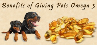 How Omega 3 Fatty Acid Supplements Benefit Pets