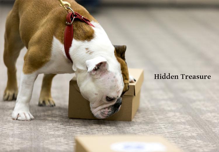 hidden-treasure