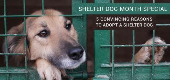 Shelter Dog Month Special: 5 Convincing Reasons to Adopt a Shelter Dog