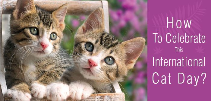 budgetpetcare-International-Cat-Day
