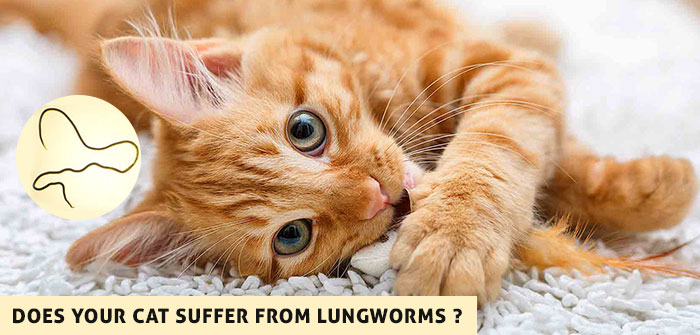 Cat Suffer from Lungworms