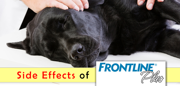 Side Effects of Frontline Plus