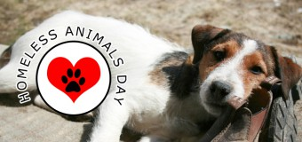 International Homeless Animals Day- Make a change on 15th August 2015!