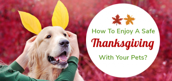 How To Enjoy A Safe Thanksgiving With Your Pets?