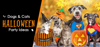 Halloween Party Ideas for Doggy & Kitty